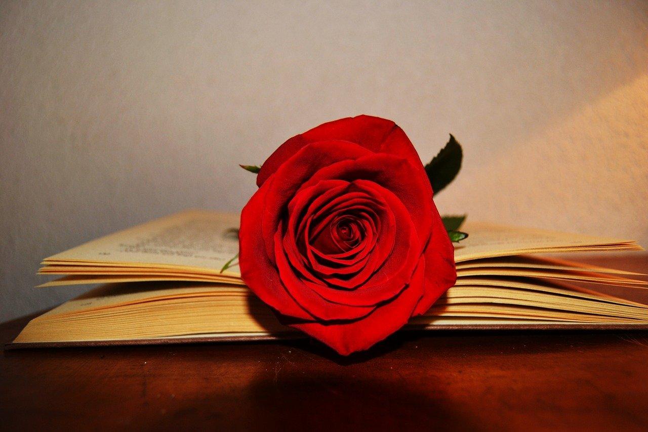 Rosa Sant Jordi sobre un llibre